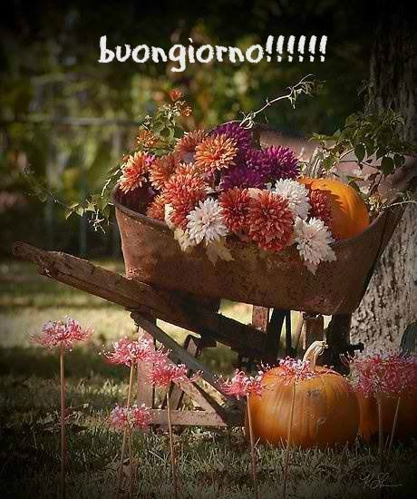 buongiorno!!!!!!