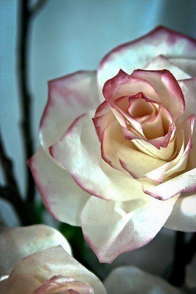 Foto návod: Ruža z kávových filtrov