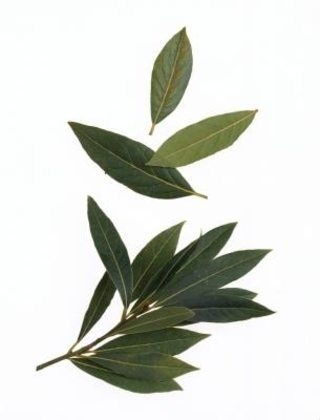 How to Use Bay Leaves to Eliminate Roaches | eHow