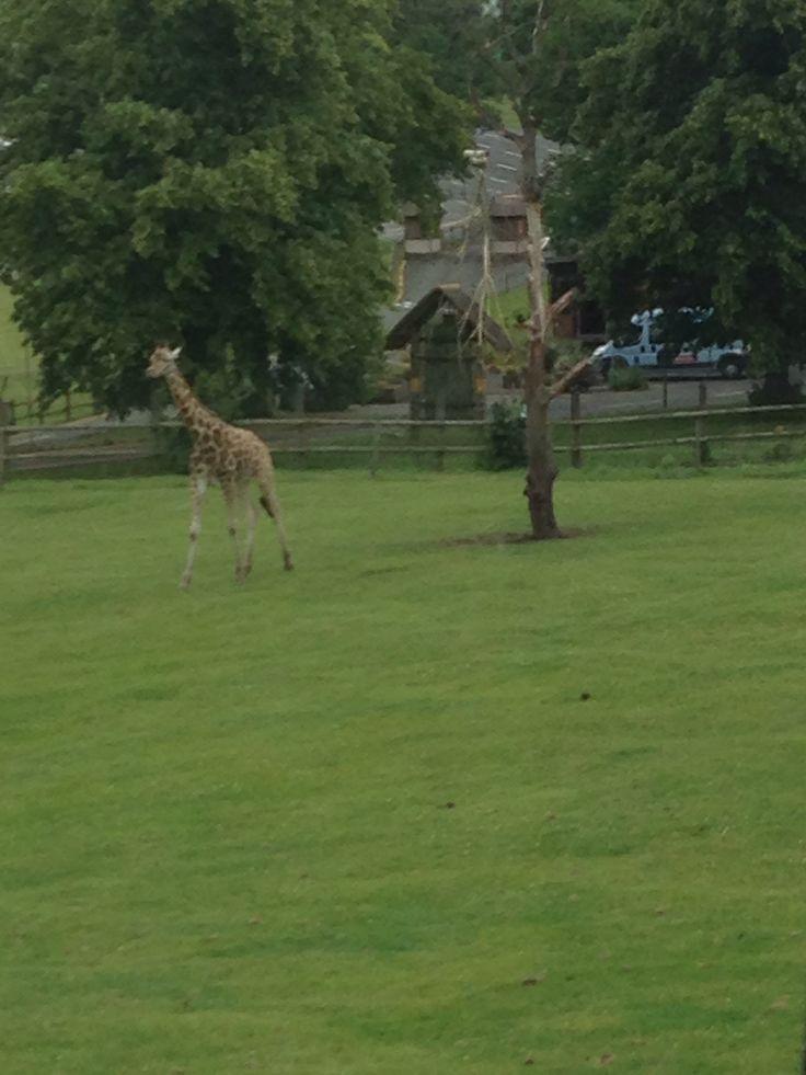 West Midlands safari park