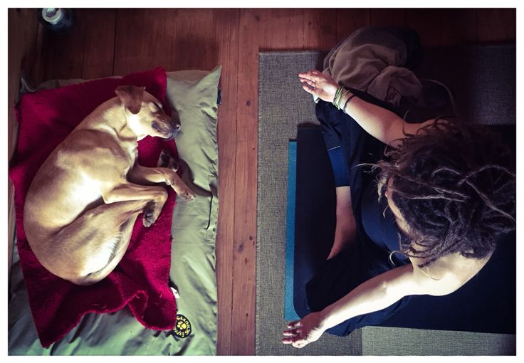 Pregnant self practice with a little help from my dog Lacey