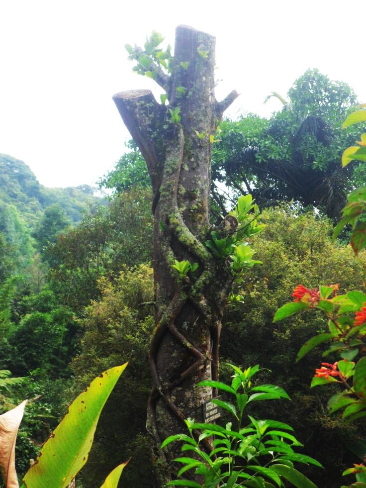 Reserva Natural Nirvana - PALMIRA - Colombia