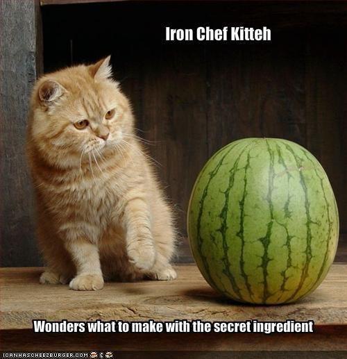 Iron Chef Kitteh &  the Secret Ingredient