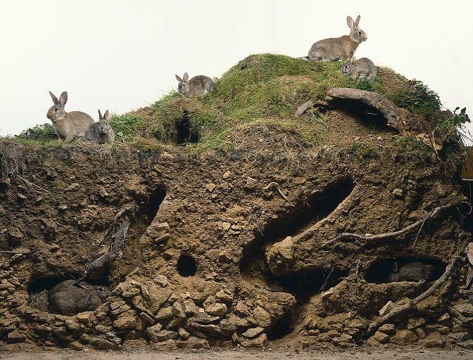 Rabbits - Harjas