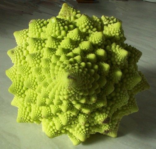 The number of spirals on the head of Romanesco broccoli is a Fibonacci sequence. Description from webdesignstuff.co.uk. I searched for this on bing.com/images