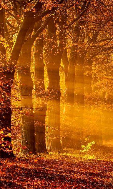 #Autumn's Paint Brush..~