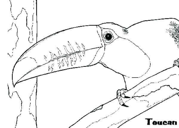 Toucan Coloring Pages Toucan Coloring Page Good Image