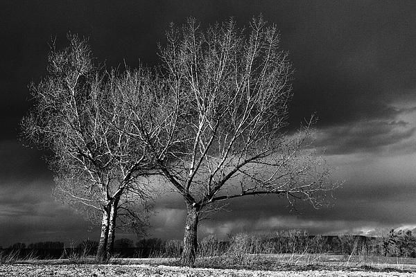 Before the storm.    The last moment before the storm. Somewhere near the Mount Vértes, Hungary.