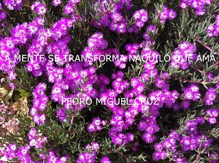 PEDRO MIGUEL CRUZ´S BLOG: Mente