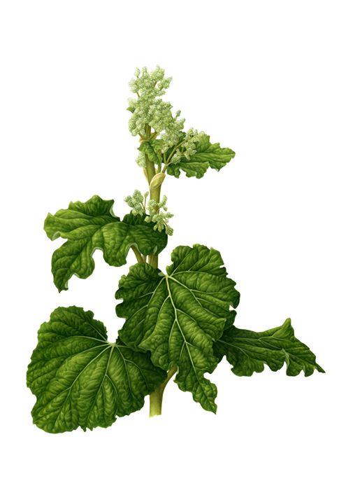 Botanical Illustrations on Illustration Served