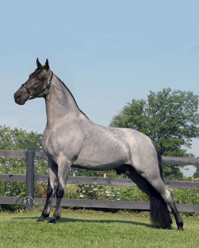 107 Best Images About Horses Roan On Pinterest