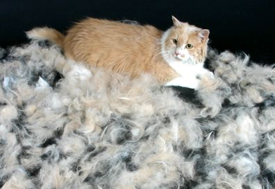 Stop the Shedding! Learn how several underlining disorders can cause a cat to start shedding hair excessively. | Cat Fancy