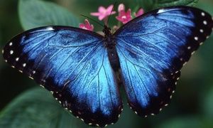 Groupon - Butterfly Center or Planetarium Visit for Two, Four, or Six at Houston Museum of Natural Science (Up to 53% Off) in The Museum District. Groupon deal price: $28