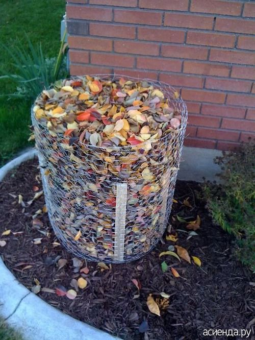 Укрытие гортензии на зиму. Моя идея и видео:): Группа Практикум садовода и огородника