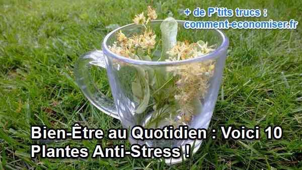 """Ces plantes ont toutes la particularité de calmer les tensions, de combattre le stress, mais à différents degrés. Elles ont également des bienfaits """"bonus"""".  Découvrez l'astuce ici : http://www.comment-economiser.fr/anti-stress-plantes.html?utm_content=buffer675b2&utm_medium=social&utm_source=pinterest.com&utm_campaign=buffer"""