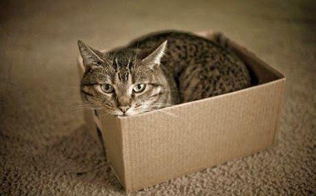 """Ο λόγος που οι γάτες αγαπούν τα κουτιά ~ """"ΤΡΕΛΟ ΓΑΙΔΟΥΡΙ"""""""