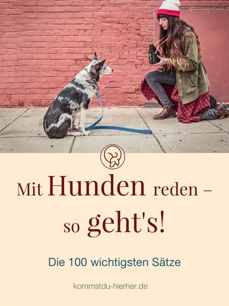Mit Hunden Reden Die 100 Wichtigsten Satze Kommst Du Hierher Hunde Hundegeschichten Hunde Fotos