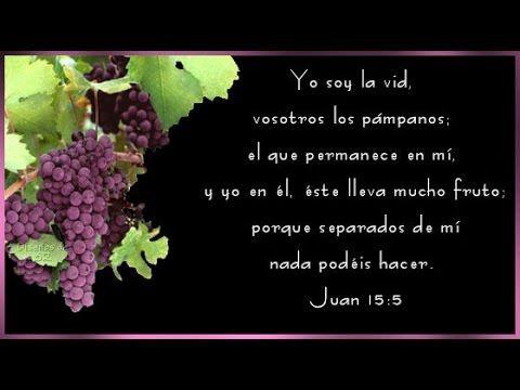 Juan 15:5  Yo soy la vid, vosotros los pámpanos; el que permanece en mí, y yo en él, éste lleva mucho fruto; porque separados de mí nada podéis hacer.