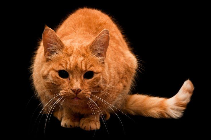 Кошки страшные черные глаза Животные