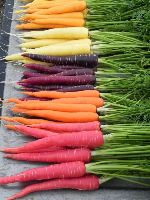 You may have read the article of how two people overcame their cancerswith five pounds of carrots juiced daily, and wondered if carrot juic...