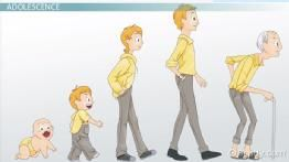 Adolescence Stage of Development: Definition & Explanation