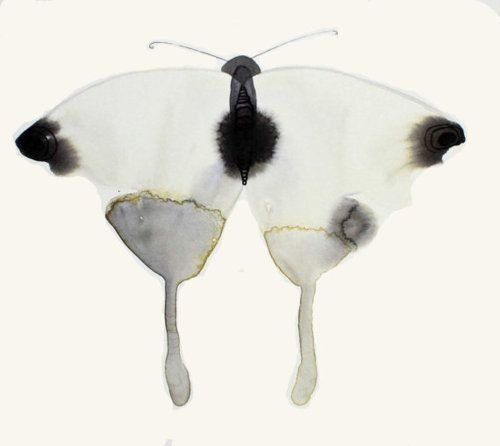Black Ink Papillon