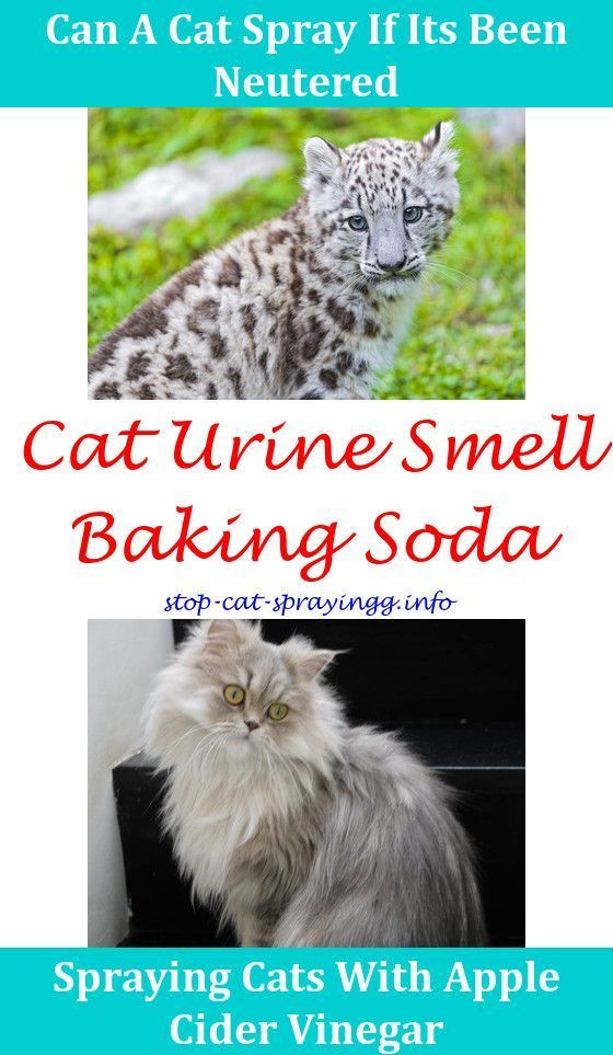 Cat Spray How To Get Rid Sprays To Put On Christmas Trees For Cats ...