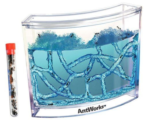 Live Blue Gel Ant Habitat Shipped with 25 Live Ants Now (1 Tube of Ants) Nature Gift Store http://www.amazon.com/dp/B00GEDQIWQ/ref=cm_sw_r_pi_dp_l.ofub1BZ1DSK