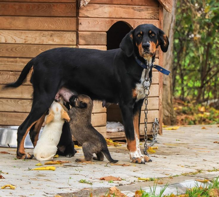 Romus & Romulus  . . #köpeksevgisi #doglove  #dog#dogsofinstagram  #ege #kuzeyege #aniyakala #zamanidurdur #gununkaresi #severekcekiyoruz #aniyakalafk #fotografheryerde #fotografia #foto #fotografdukkanim #fotosayfam #turkishfollowers#turkinstagram #turkobjektif #canon #canonphotography #canoneurasia #canontürkiye #canon80d #vet #veteriner #veterinary #veterinarian #veterinarylife