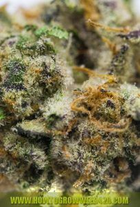 7 Good Marijuana Affiliate Programs - Order Edibles Online