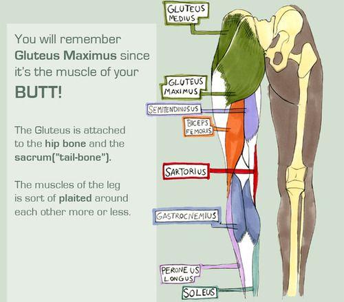 Anatomy For Massage