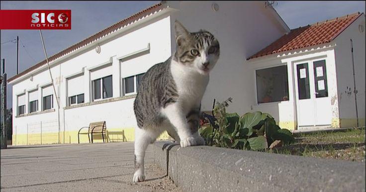 As escolas de Coimbra estão a adoptar gatos abandonados. A ideia tem benefícios para todos: os gatos encontram uma casa e as crianças desenvolvem a responsabilidade.