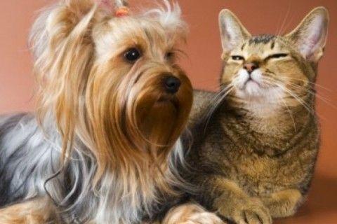 Campanha de esterilização de cadelas e/ou gatas vai decorrer no concelho de Torres Vedras