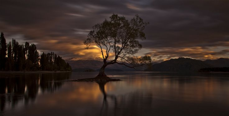 """The Wanaka Tree"" by Ingrid Kjelling // What a breath taking view. Nice shot!"