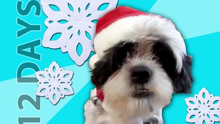 """Animals Sing """"12 Days of Christmas"""". This is by far my FAVORITE Christmas video EVER."""