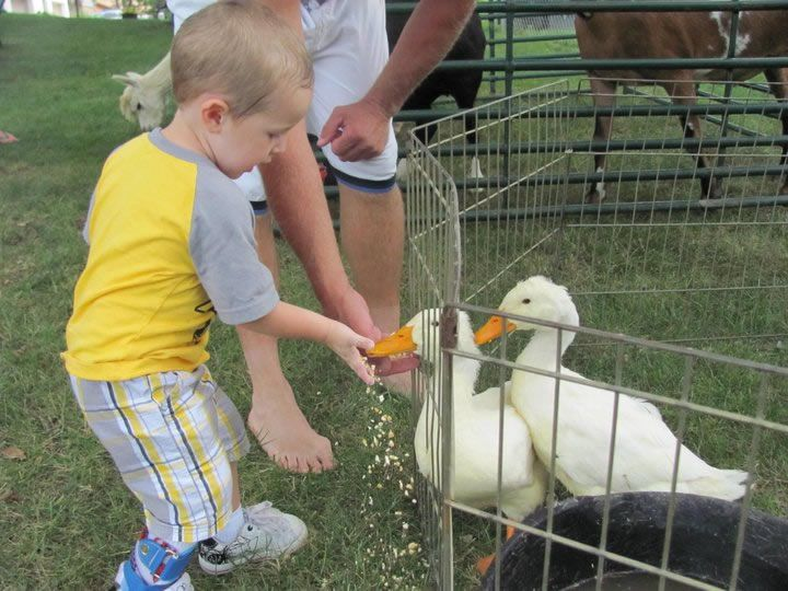 Petting Zoo Birthday Party Louisville Ky Image Inspiration of