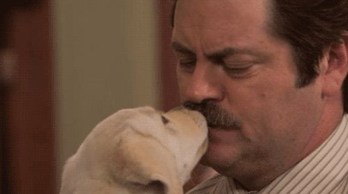 25 Ron Swanson Memes `I like your moustache. I wish I could grow one but I`m just a little puuuppy`