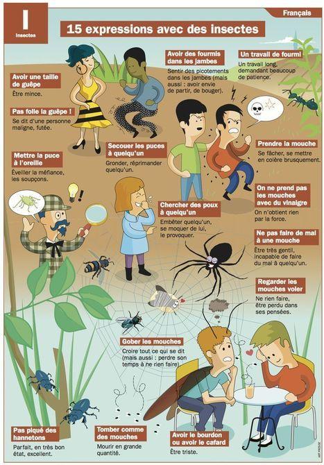 15 expressions avec des insectes | POURQUOI PAS... EN FRANÇAIS ? | Scoop.it