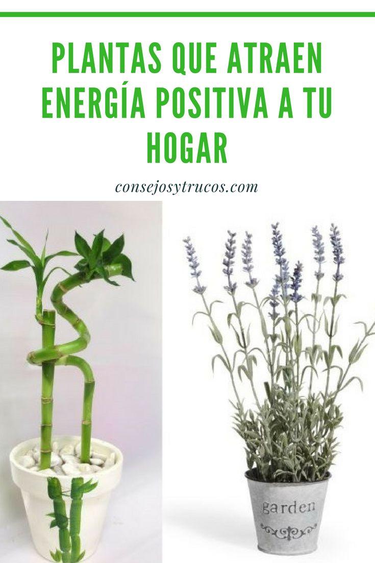 Estas son las plantas que traen energías positivas para su casa