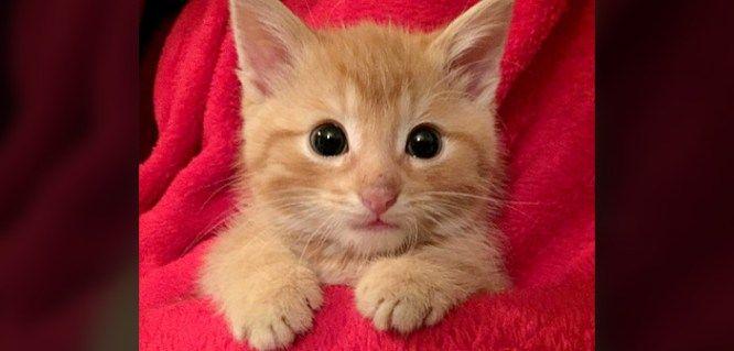早朝のゴミ捨て場で鳴いていた子猫。お腹と心が満たされると… とっても幸せそうな姿を見せてくれた (*´ω`*) 12枚