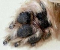 9 Fun Facts About Dog Paws You Didn't Know