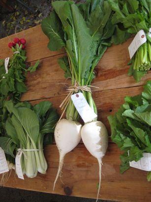 「すぐき」は「酸茎」とも書き、別の名ではスグキナ(すぐき菜)、カモナ(賀茂菜)すぐき菜は、京都市北区上賀茂に伝承する在来のかぶの一種で、漬物となったとき特有の風味のある酸味(乳酸発酵)から「すぐき」と名付けられました。