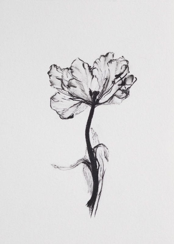 Original Charcoal Flower Drawing No. 1 by WhitMcGowan on Etsy