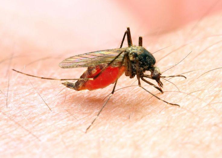 #Paraguay, libre de malaria - La Nación.com.py: La Nación.com.py Paraguay, libre de malaria La Nación.com.py Paraguay, está libre de casos…