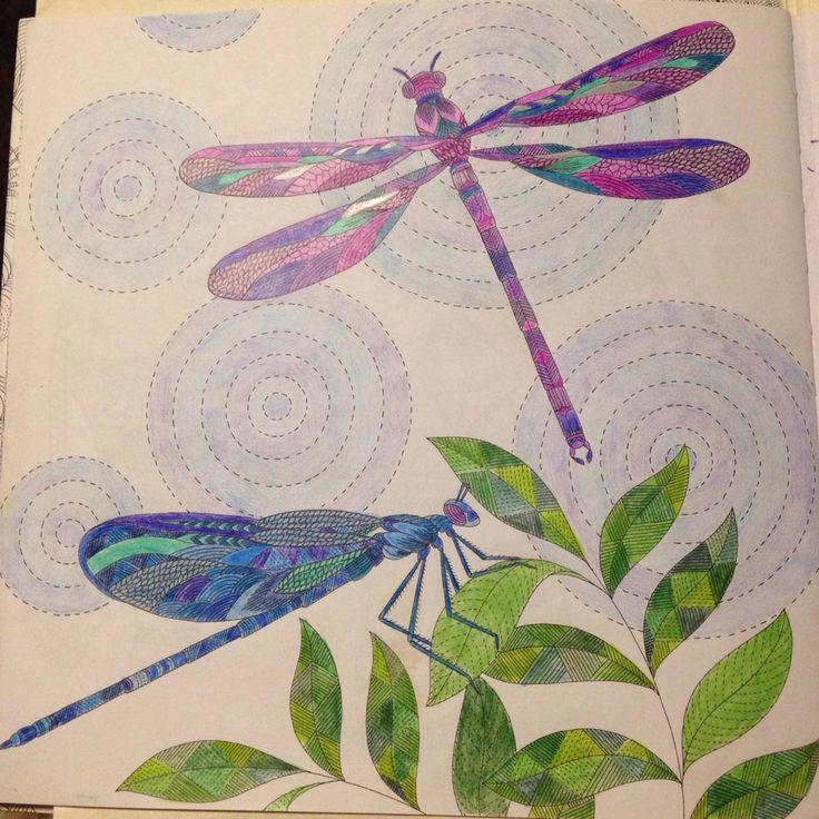 Animal kingdom dragonflies # Millie Marotta