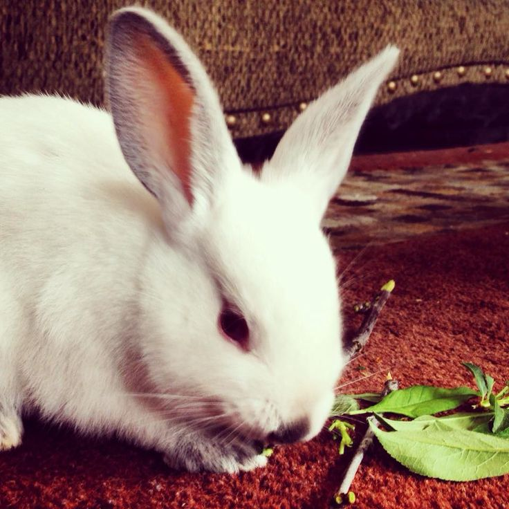 Put rabbits up for adoption questionnaire