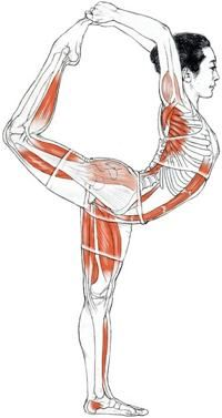 fuckyeahnamaste:    I wish someone could do an MRI scan of someone else doing yoga so we get to see how our insides get squished and move about during yoga.    For some reason people think backbends involve flexibility in the back portion of the body … but here you can see how backbends are great to stretch out the front of the body!