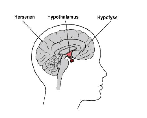 Spreekuurthuis hypofyseziekten