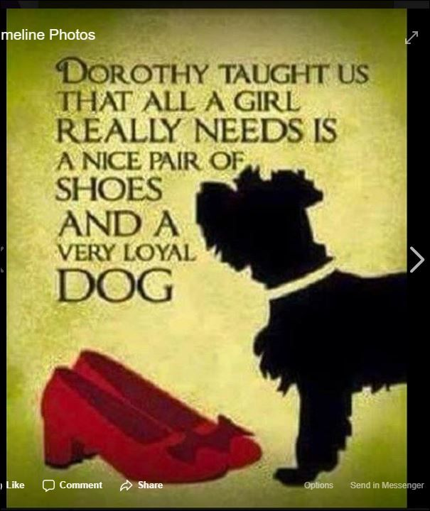 Pin By Karen Mac Kinnon Martin On All Things Scottish Dog Quotes Loyal Dogs Dogs