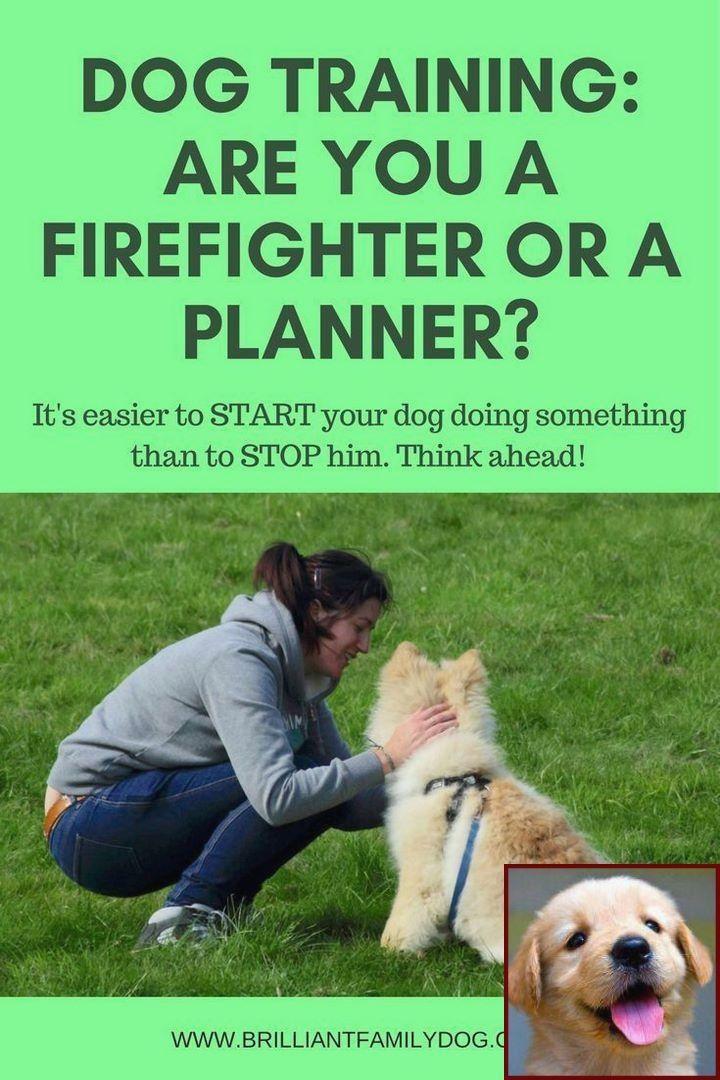 Dog Behavior By Age And Clicker Training Dog Buy Dog Training